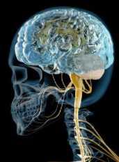 新型コロナウイルスの後遺症に「脳の白質の変化」が関係